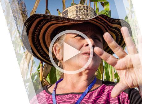 Alternative Crops - Coca - Colombia
