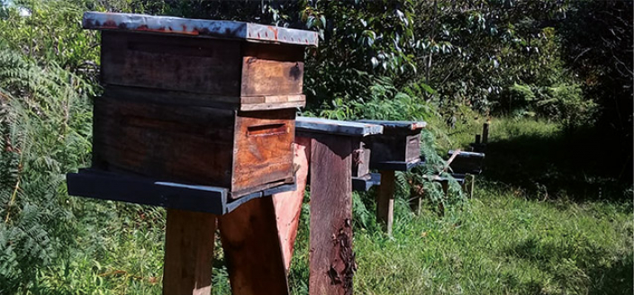 anori colombia beehive