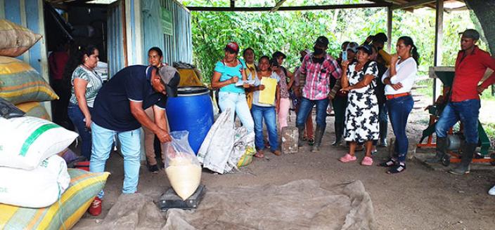 New Jobs Ex Combatants Colombia Farming