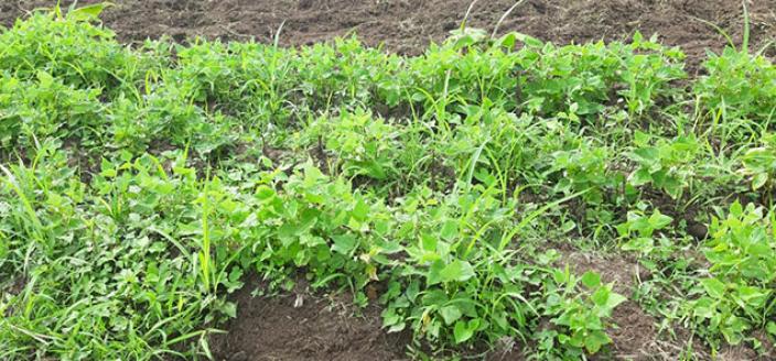 Colombia Reintegration - Farming
