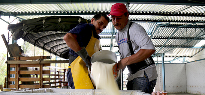 Dairy in Colombia