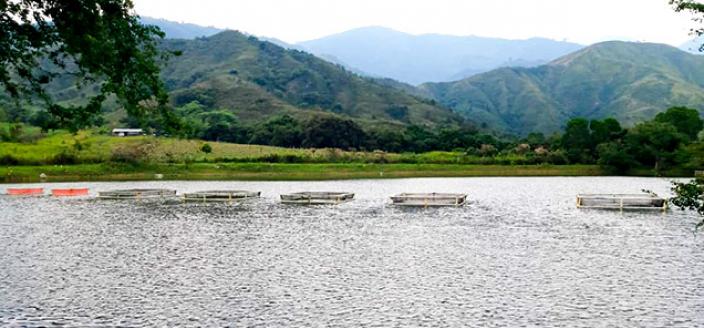 Colombia Reintegration - Fish Farm