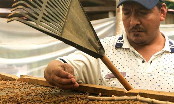 Teaching Coffee Farming Colombia