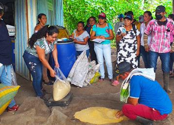 New Jobs Ex Combatants Colombia Farming Maize