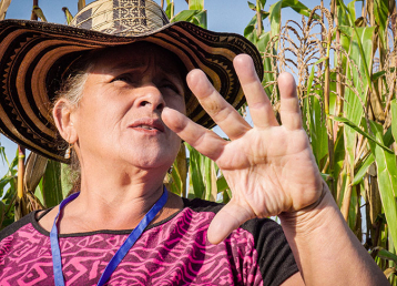 Illicit Crops - Alternative Jobs