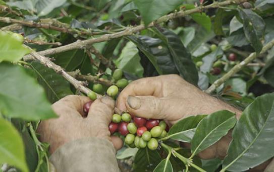 Alianza con Illy Caffè
