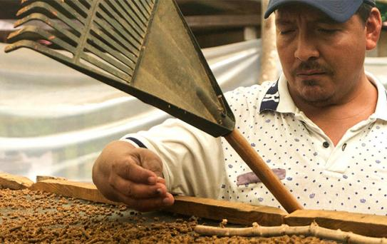 Teaching Coffee Farming Colombia